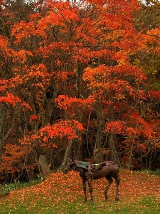 葉っぱが真っ赤に