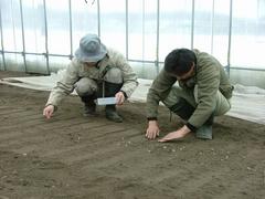 農業生産チームのSさんとGさんが農作業をしていました