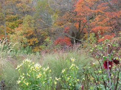 ヤナギの庭の生垣の中 素敵です
