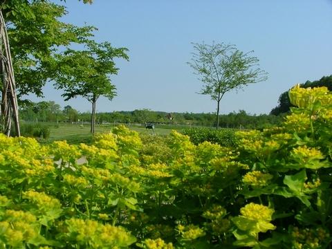 ヤナギの庭から見た風景