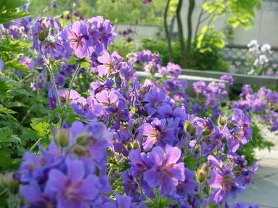 花たちは光りだす