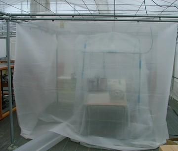 施設の中にある保育器のようなハウス