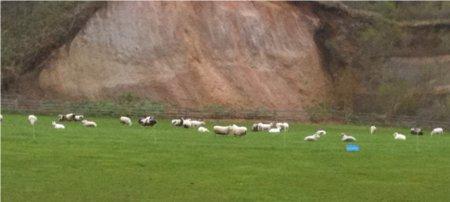放牧羊群.jpg