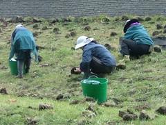 ①丘に球根を植えるスタッフ