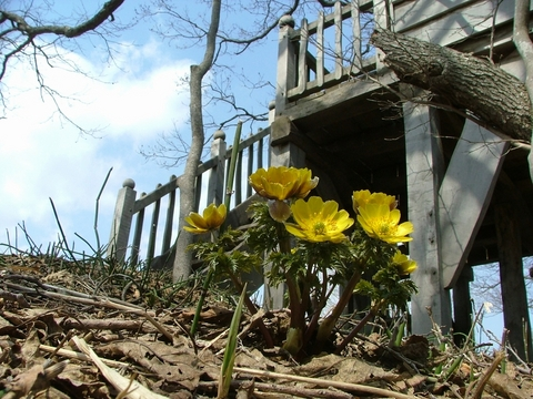 茅葺屋根の家