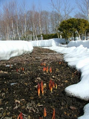 青空と雪と芽と…