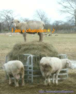 表彰台の羊.jpg
