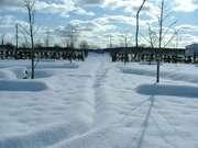 誰も歩いていない1月5日銀河庭園の小道