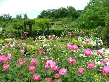 バラの香りいっぱいのローズガーデン