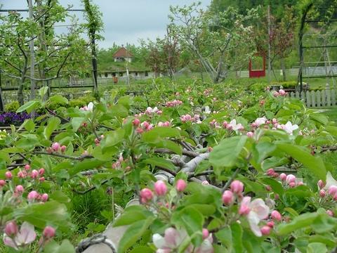 「オーチャード」果樹園の意