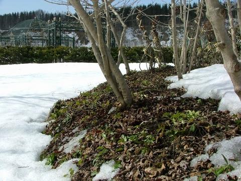 この盛り土は芝を重ねたもの