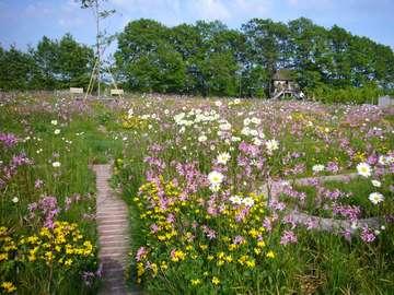迷路はイギリスでは伝統的なガーデンスタイルです