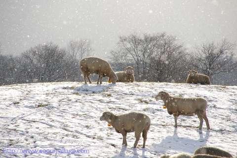 091128羊の放牧地
