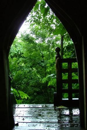 キャスルツリーハウスから見える深緑
