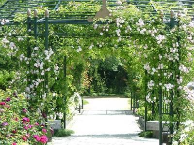 バラ園の奥へ続く小道