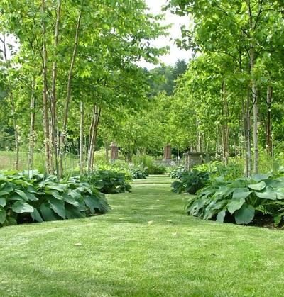 サーペンタイン ギボウシさんの涼しげな庭
