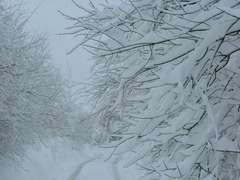 """""""雪の花""""がラジオから流れた"""