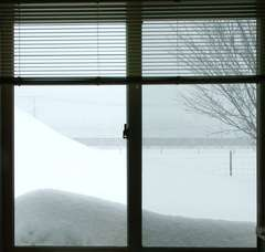 事務所の窓です