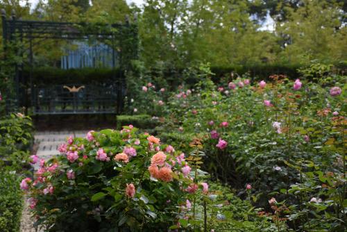 Rose1_2190.jpg