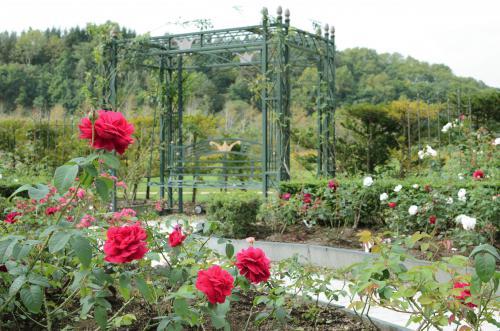 rose04.jpg